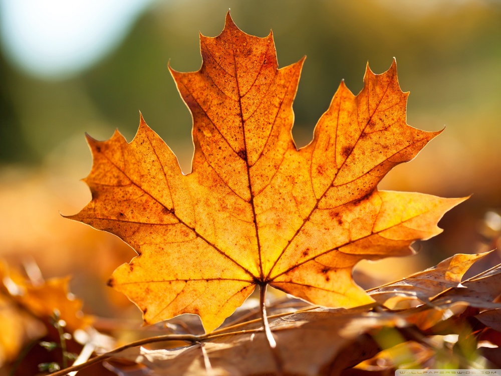 1296065080_autumn_leaf-1024x768.jpg