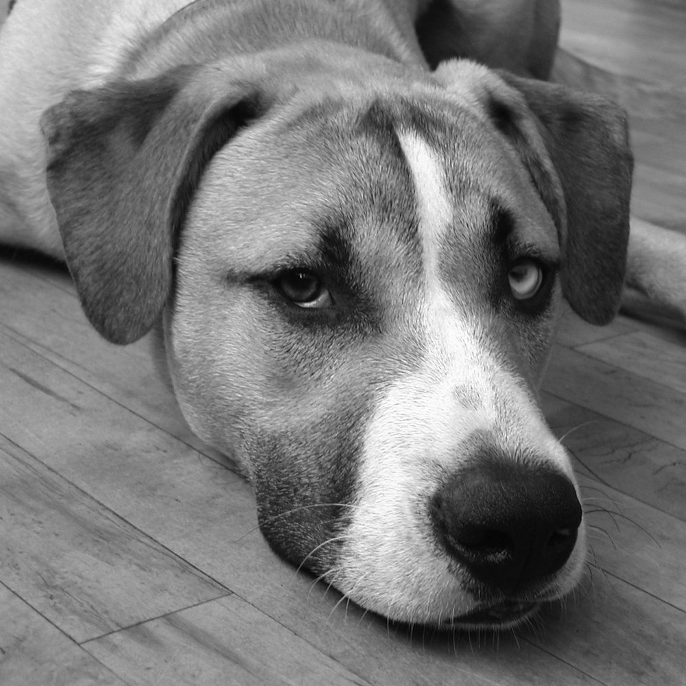 Louie 2002 - 2014