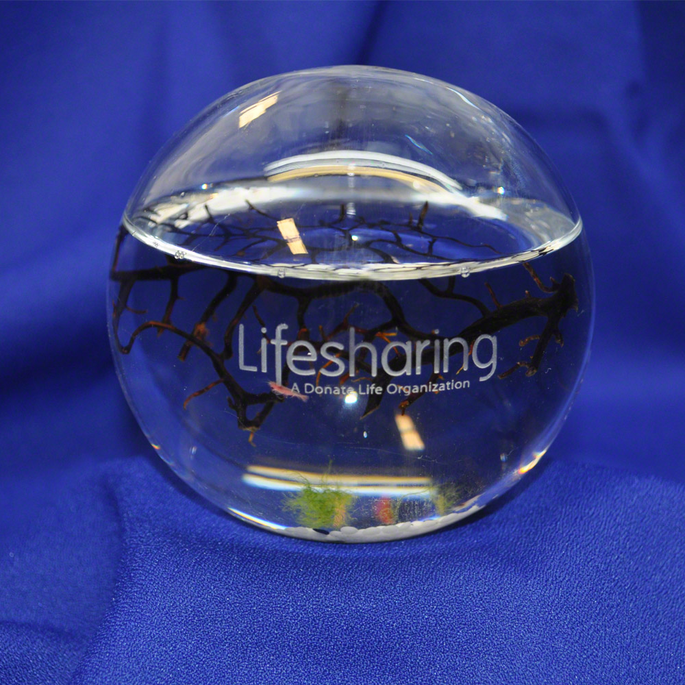 lifesharing-ss-ww.jpg
