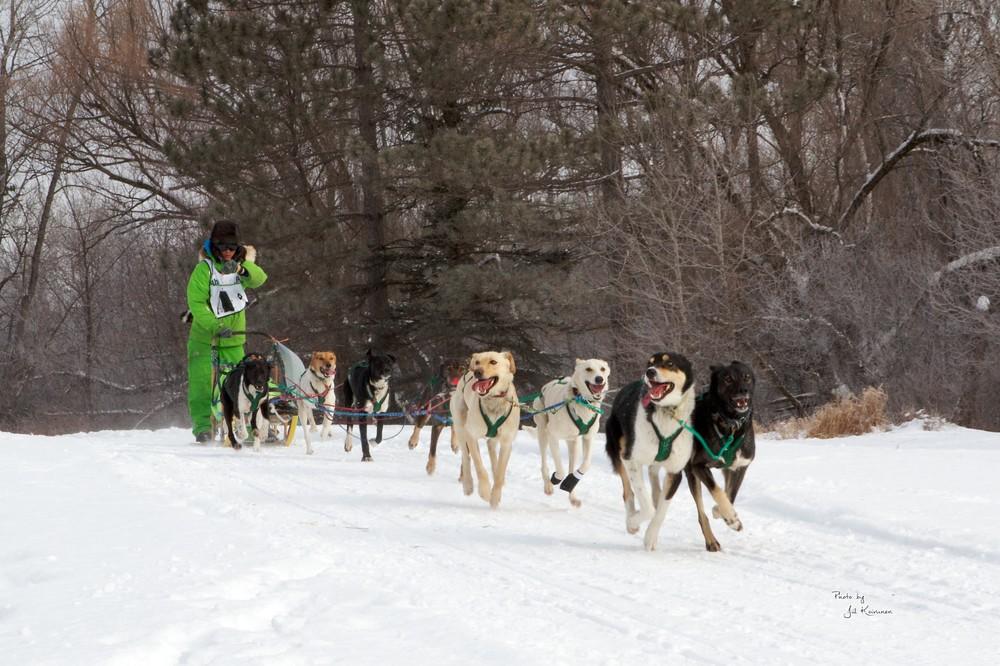 Sled Dog 3 - Jill.jpg