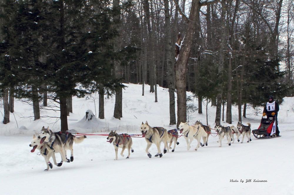 Sled Dog 6 - Jill.jpg