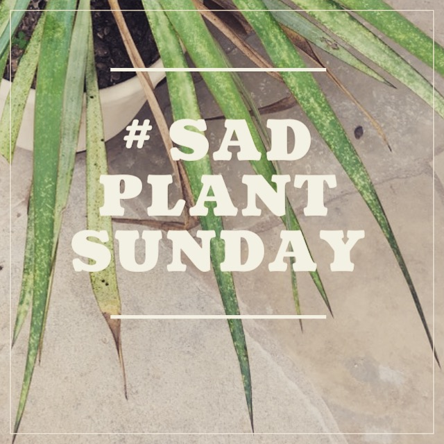 Each Sunday, I will try to help someone solve a problem with a sad plant. Indoor and outdoor plant submissions are welcome. To submit to #SadPlantSunday, send me a photo of your plant and a description of the situation. You can direct message @deltadawngardens on  Instagram , post on Delta Dawn Gardens'  Facebook , or email leah@deltadawngardens.com.