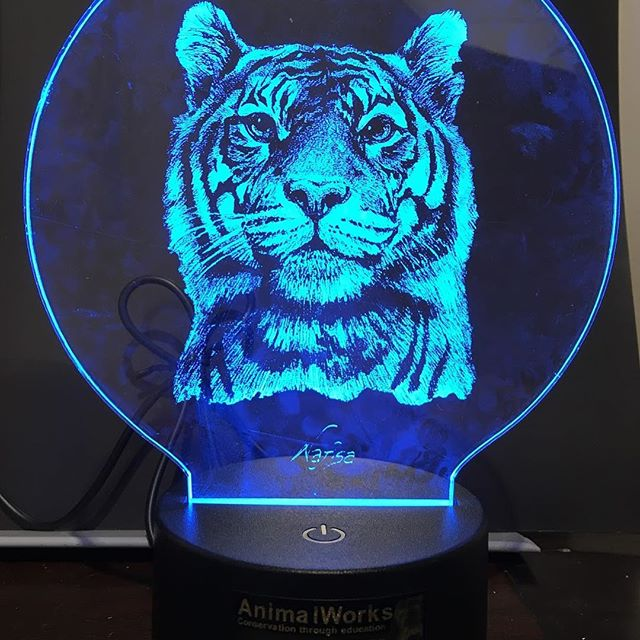 **CHRISTMAS SPECIAL!** (was $57.50) **NOW $35** Hurry whilst stocks last! 🐯 Would you like to buy a piece of unique tiger art? Our custom made LED Lights featuring one of Nafisa's tiger drawings are the perfect addition to any animal lover's home. 🐯 All lights come with 7 colour options and can be set to change automatically every few seconds, stay on one colour or there's the disco flash option! The colours can be changed by remote control (which comes with the light) or on the light itself. 🐯 See link in bio . . . . #tiger #tigerart #art #gallery #fundraiser #charity #nonprofit #animalworks #sydney #mosman #wildlife #wild #notmytrophy #conservation #charity #notforprofit  #worthmorealive #artforpurpose #makeartdogood #artforconservation  #conservationeducation #environmentaleducation #careforourplanet #endwildlifecrime #lightart