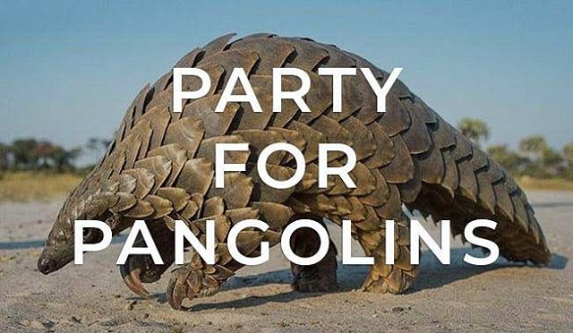Happy World Pangolin Day! We can't wait to celebrate, and raise much needed money for, these amazing animals next month. We hope you can join us! Link in bio for more details 💛