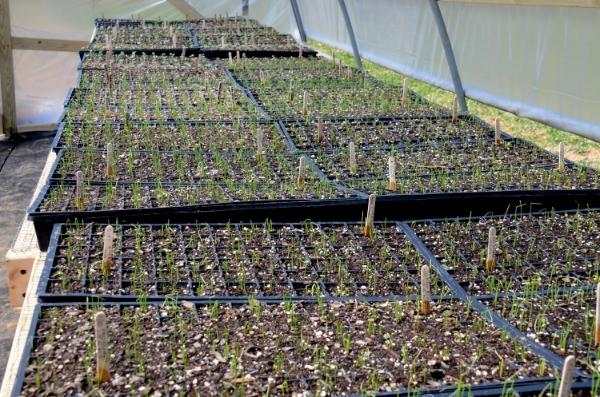 Seedlings galore