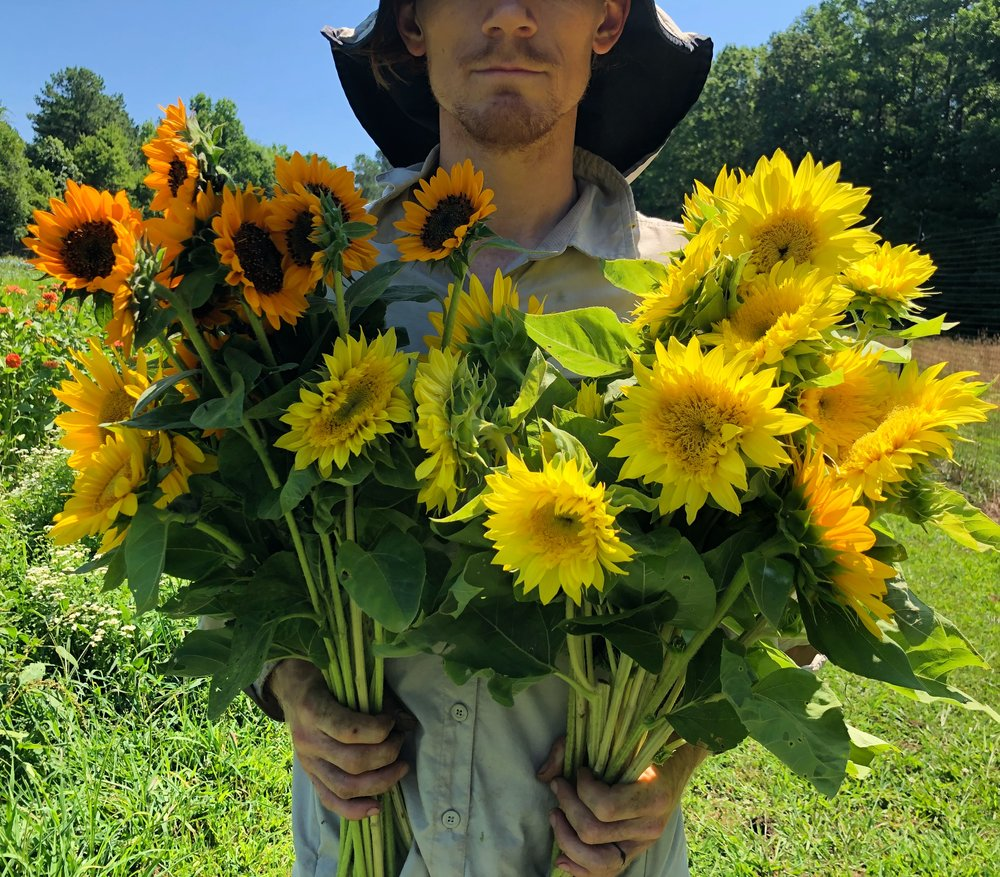 Sunflowers dave.JPG