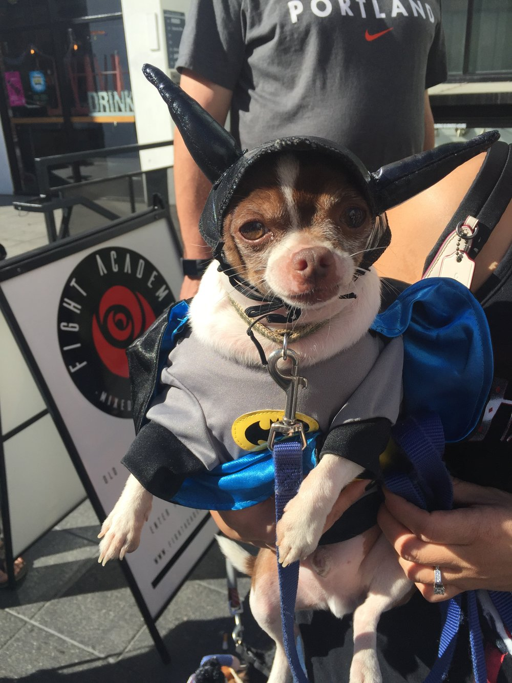 chihuahua batman halloween costume.jpg