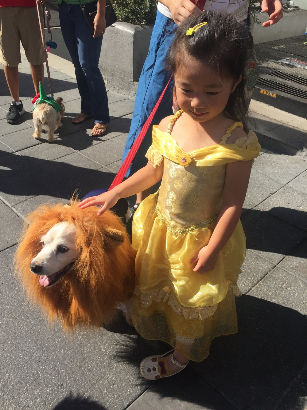 Beauty and the beast dog halloween costume.jpg