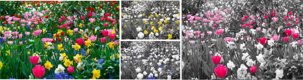 Check out one of our image processing challenges! Where ever you click, just show that color.