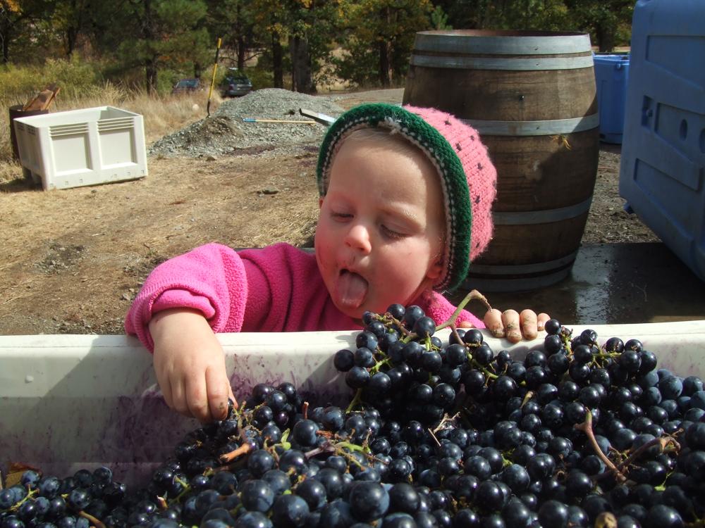 mountain_vineyards_088[1].jpg