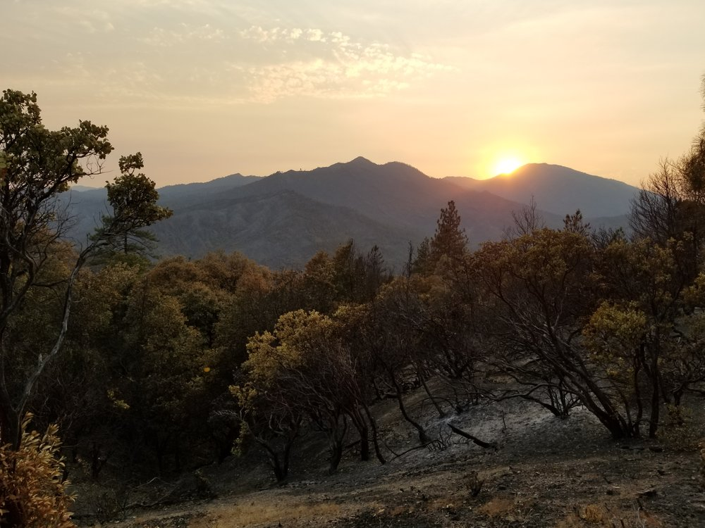 Post Carr fire view to the West. Damage not quite as severe on the West side of the ridge. Still unsure which if any of these trees will survive.