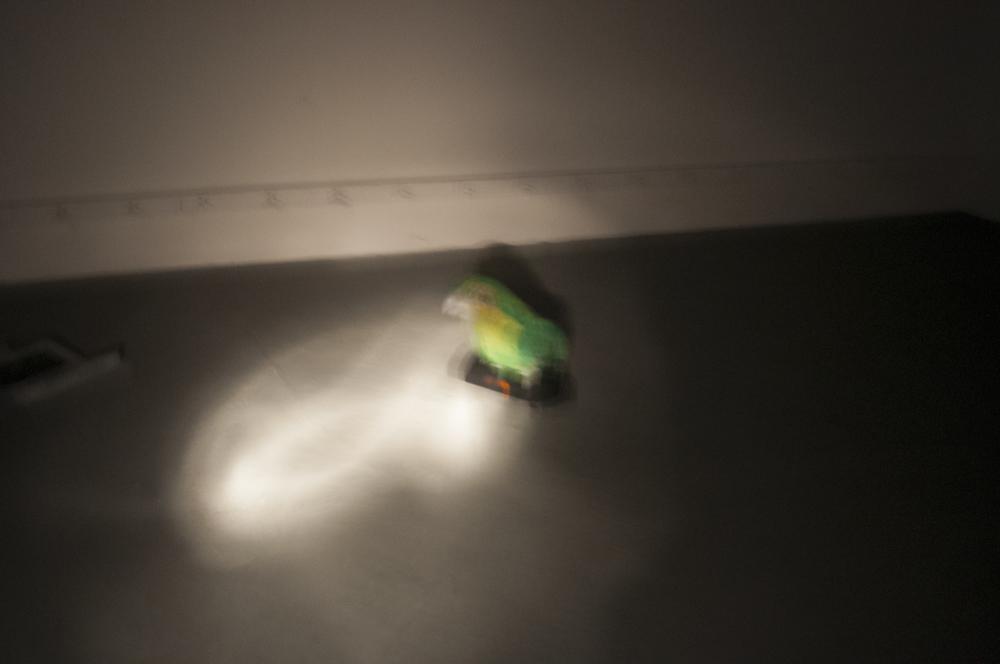 kakapodark.jpg