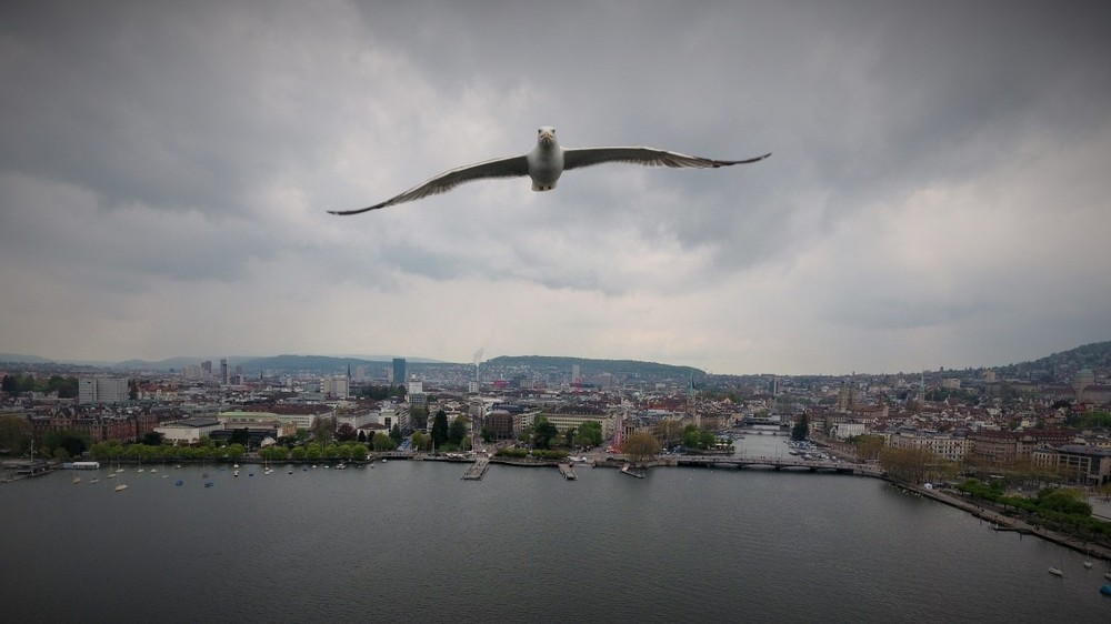 A curious bird in Zürich, Switzerland - By AirDroner