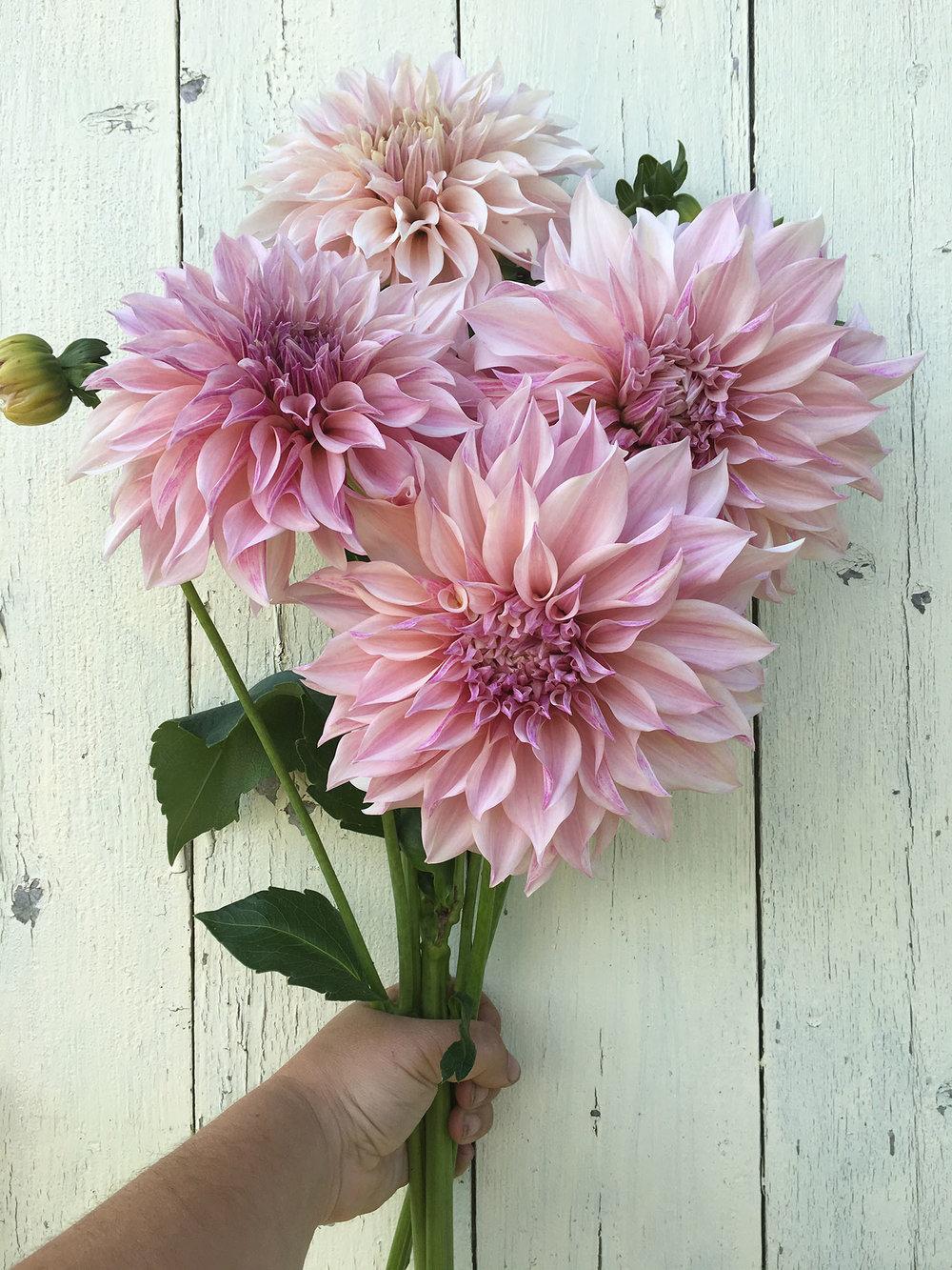 Dahlia Workshop Tarrnation Flower Farm