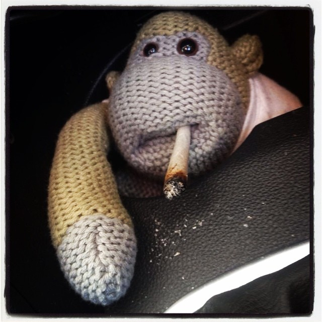 Monkey had to put the zoot on ice while we stopped to get petrol...