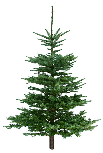 Our Trees Pick The Perfect Christmas Tree At Swansons