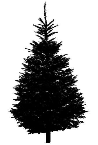 tree3 (2014_12_03 00_24_12 UTC).jpg