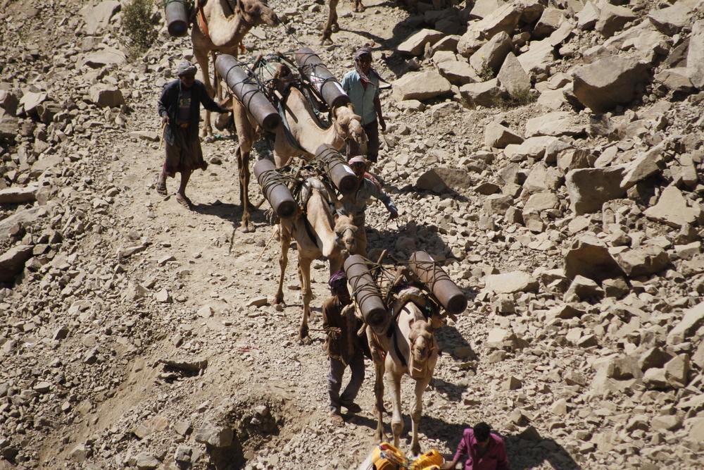 Ce commerce est particulièrement lucratif pour les propriétaires de chameaux