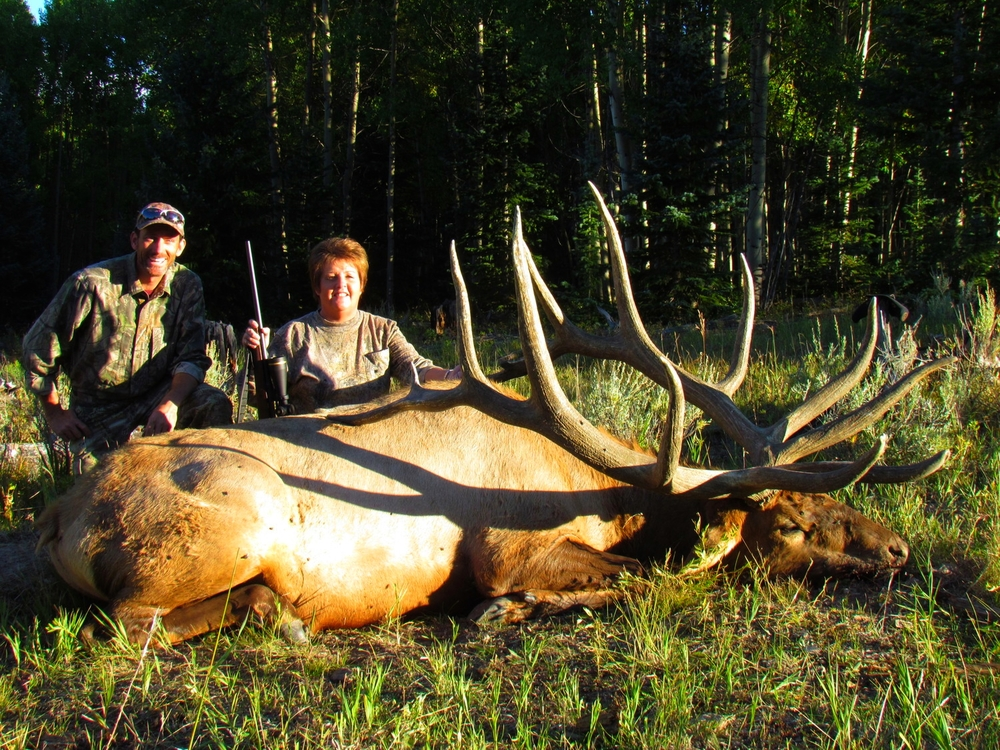 470 inch typical bull elk