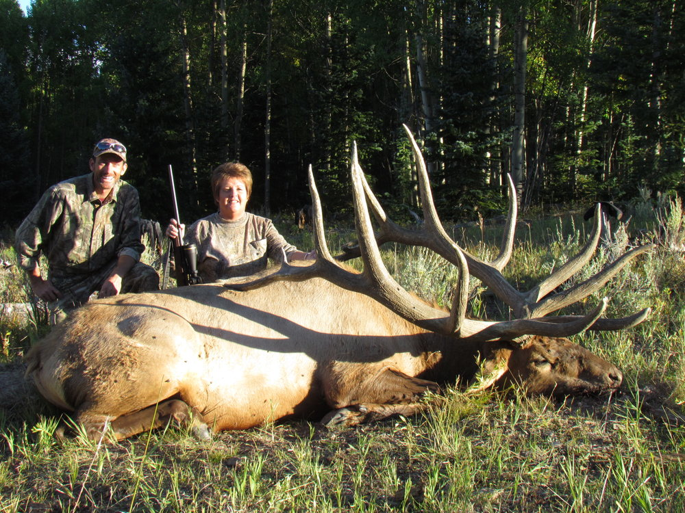 450 plus bull elk - CALL FOR Pricing