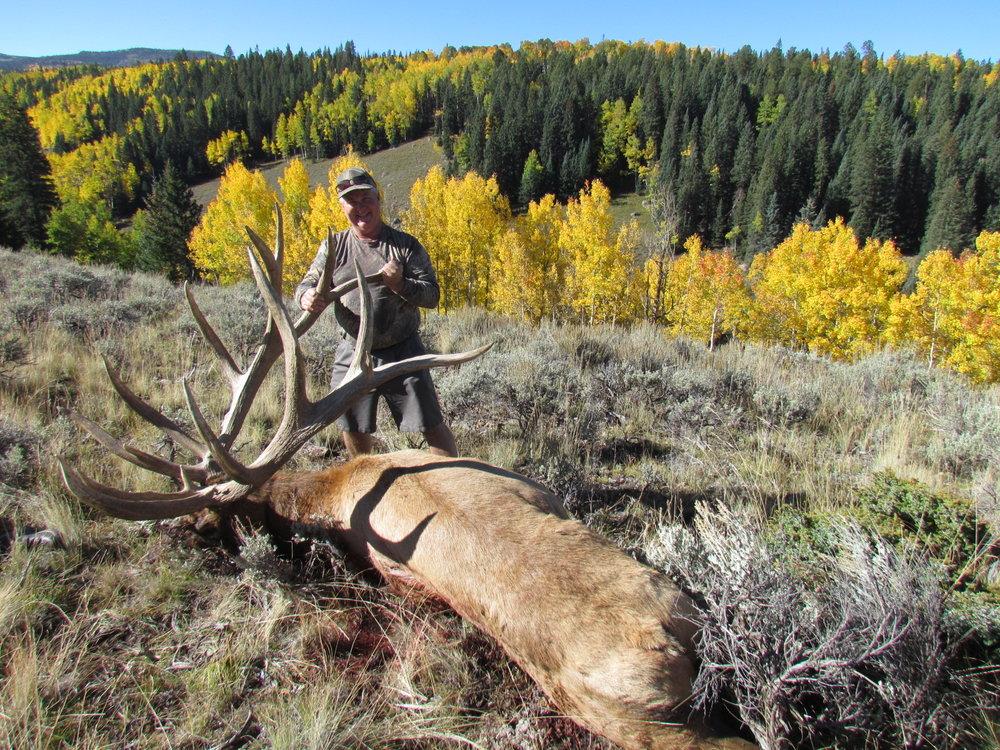 500 plus bull elk