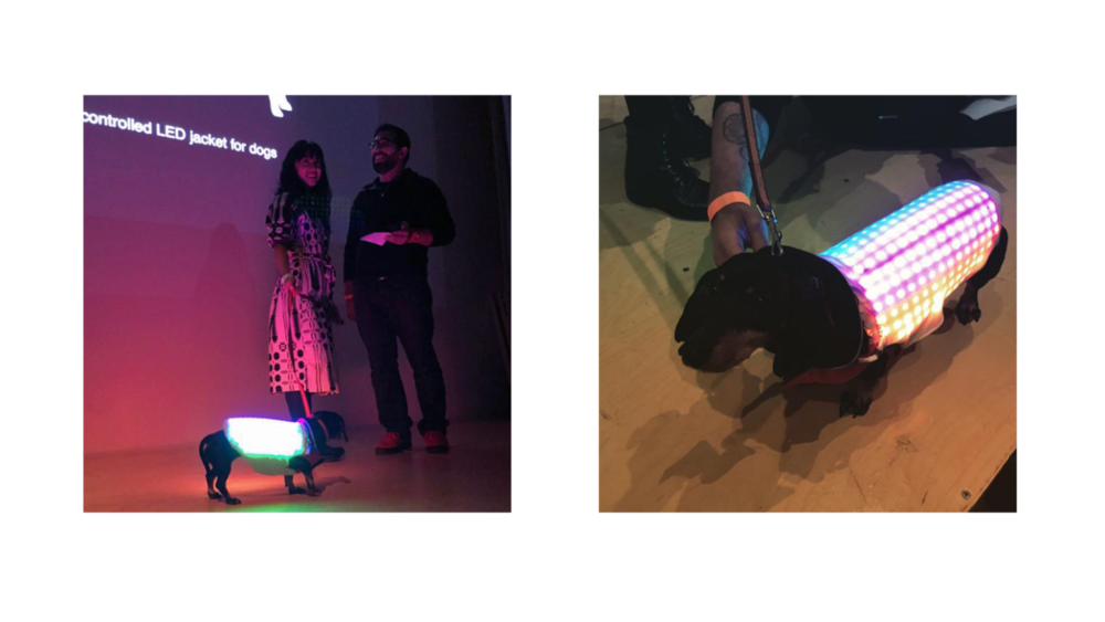 Disco Dog making her debut at NEW INC's Demo Day!