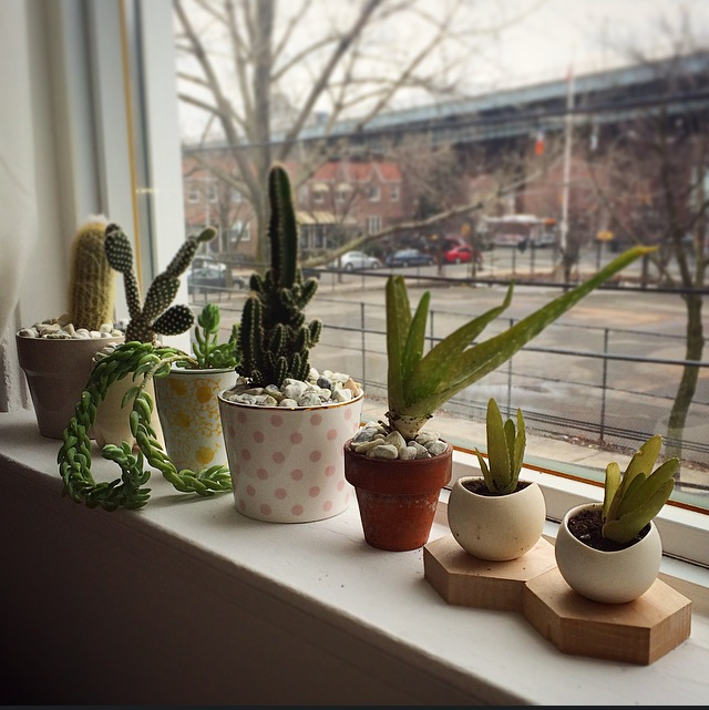 Special guest stylist Mahe Zannettis: make arrangement small arrangements and group them to create a window sill display. Use low maintenance plants like cactus and succulents that only require weekly watering and sunlight.