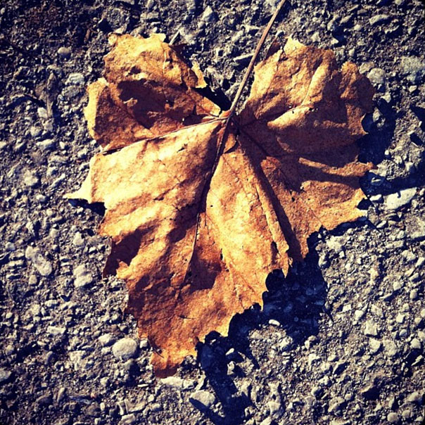 Heart 2 - Leaf