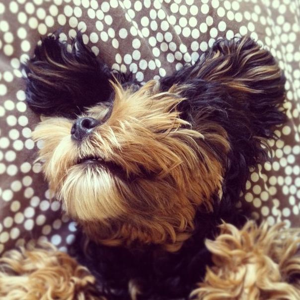 Heart 3 - Pup Pup
