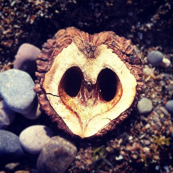 Heart 7 - Nut