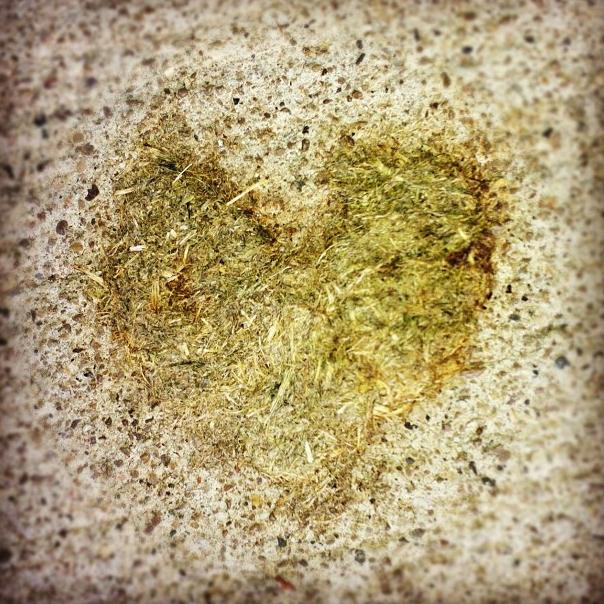 Heart 8 - Goose Poo