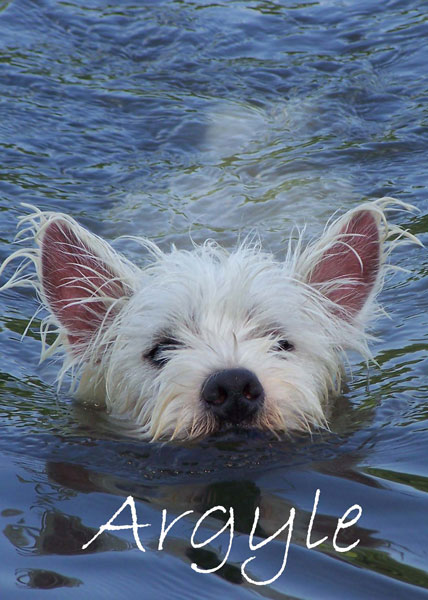 Arglyle-swimming-desktop.jpg