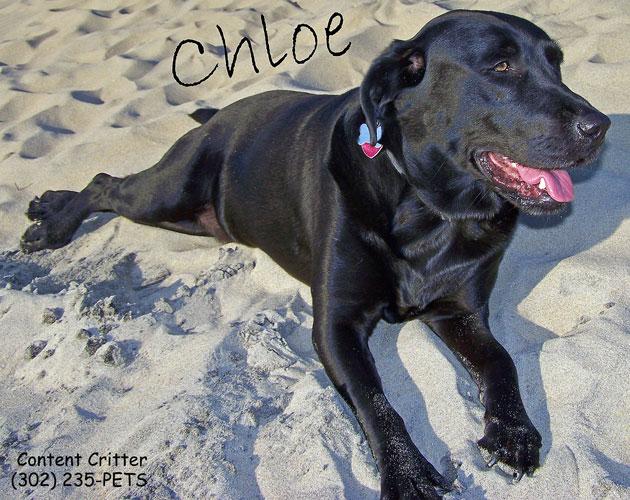 Chloe-desktop.jpg