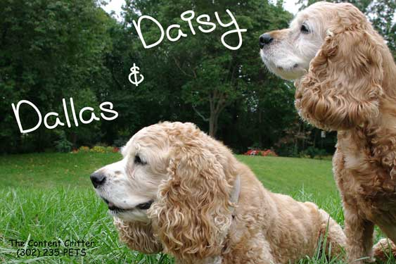 Dallas_Daisy-mag-reduc.jpg