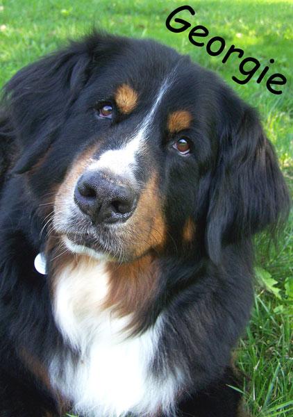 Georgie-desktop.jpg