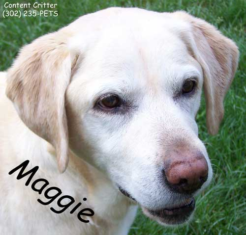 Maggie-for-desktop-site.jpg