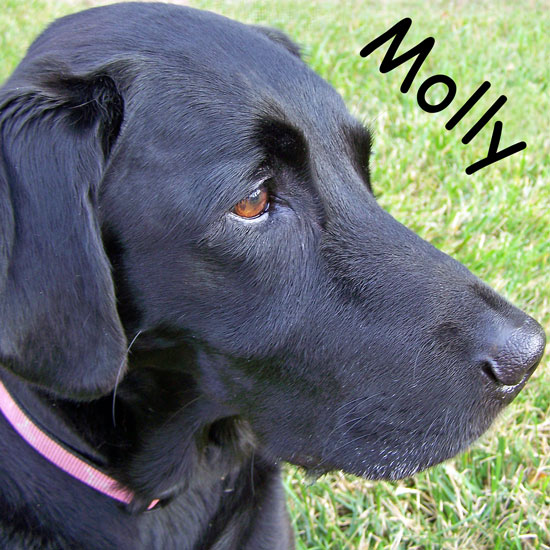Molly-Bescript-desktop.jpg