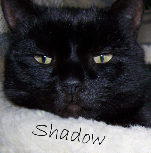 Shadow-desktop.jpg