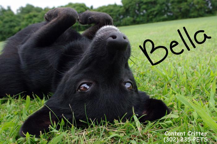 Pup enjoying doggie day care. Cute pose Bella.