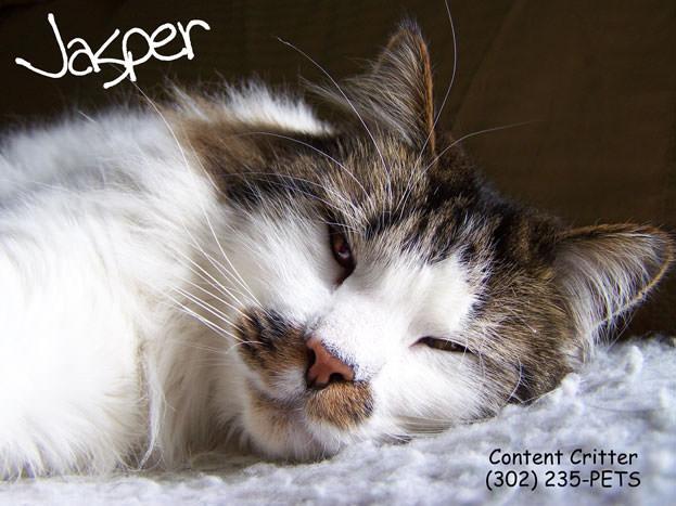 Older cats like Jasper benifit from pet sitting