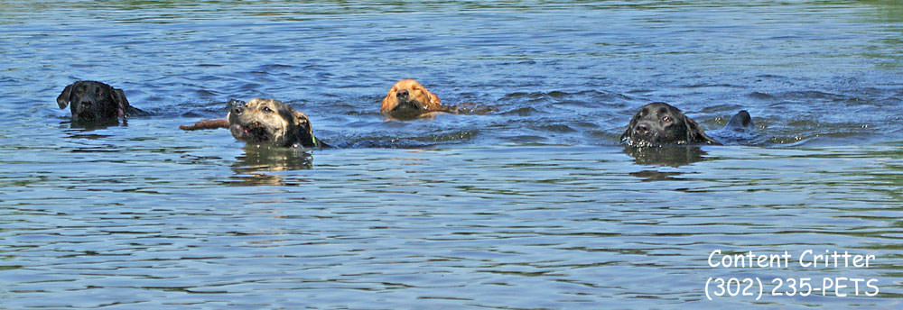 4-dogs-swimming.jpg