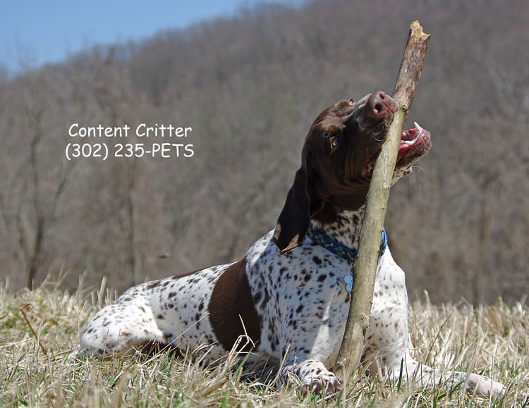 Murhphy-relaxing-GSP.jpg