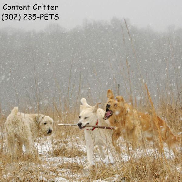 Murphy,-Roni,-Chioe-dogs-fu.jpg