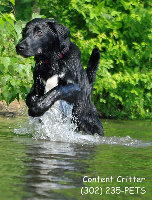 Parker-jumping-water-8862r.jpg
