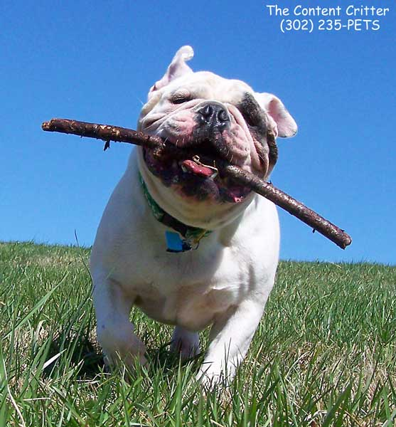 Ruben-fetch-stick-redu-3441.jpg
