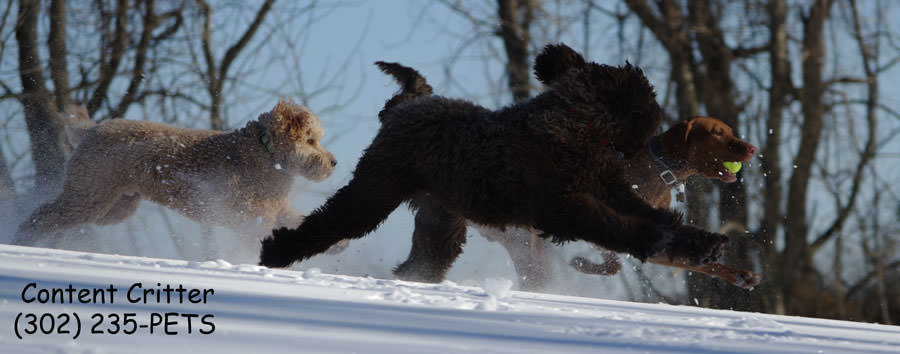 Toby-Biame-Drake-snow-8882.jpg