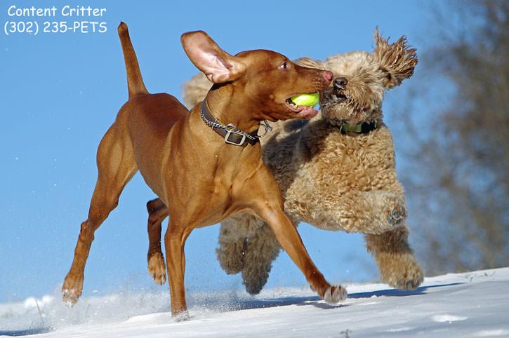 Toby-Drake-snow-8967r.jpg