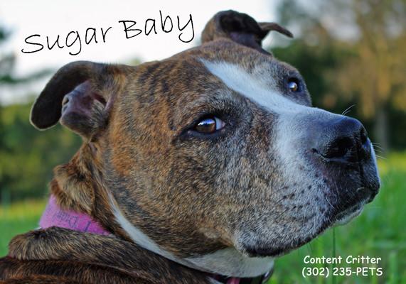 Sugar-Baby-Content-Critter-.jpg
