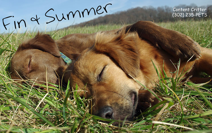 Fin-Summer-tired-dogs.jpg