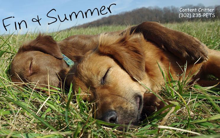 Fin-Summer-tired-dogs.jpg